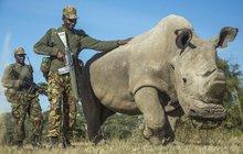 Sudán (†45) zemřel, ale naděje na záchranu jeho druhu zůstává!