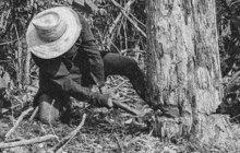 Krvavé drama se odehrálo počátkem února 1929 v lese u Kvasova na Podkarpatské Rusi. Pět lesníků tam překvapilo jedenapadesát vesničanů, kteří načerno káceli stromy, aby se zásobili dřevem.