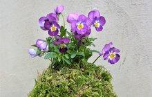 Květinové aranžmá v mechové kouli vyrobíte sami!