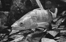 Smrtící detonace se ozvala jednoho červnového nedělního odpoledne roku 1988 na východním Slovensku. Výbuch na břehu říčky zvané Kamenec u obce Zborov poblíž Bardejova zabil muže, který se k vodnímu toku vydal lovit ryby.