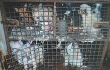Za týrání 218 psů padla podmínka