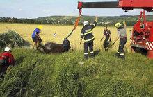 Uvízl v »pasti«! Kůň v sobotu v Hrušovanech na Brněnsku spadl z mostku do potoka plného bahna a už se nedokázal dostat zpět na břeh. Na pomoc museli dorazit hasiči s jeřábem.