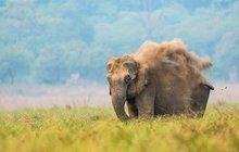 Strašidelný slon z Indie: Húú, jsem přízrak!
