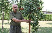 Ovocné stromy potřebují nejen vodu! Zahrádkáři: Stavějte alespoň podpěry. A jaké bude počasí?