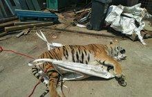 Stát zasahuje proti tygřím jatkám: Žádný vývoz ani mazlení