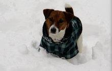 Rádce Aha!: Nástrahy psí zimy