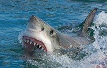 Drastická smrt Čecha (†42) v Egyptě: Okolnosti roztrhání žralokem jako z hororu!