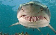 Petra (†42) v Egyptě zabilo obří kousnutí. Odborníci už ví, jaký žralok ho zabil