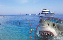 Šokující snímky z Egypta! Žraločí safari v místě, kde zemřel Čech Petr (†42)