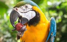 Papouška choulícího se tři dny na střeše domu přijeli v severním Londýně zachránit hasiči.