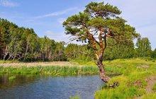 Cestování za památnými stromy Česka - 2. část