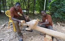 Žádné repliky, ale originální sochy! Ty ozdobí v Zoo Zlín kontinent Afriky. Návštěvníci tam mohou nyní vidět čtyři africké umělecké řezbáře přímo při práci.