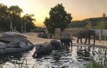 Velké dobrodružství zažili sloni v Zoo Praha. Poprvé v životě strávili noc pod hvězdnou oblohou ve venkovním výběhu. Změnu dosavadního režimu přijali s nadšením a snažili se přetroubit vytí vlků. Zvítězila sloní zvuková přesila.