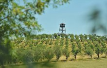 Sezona vinobraní je v plném proudu: Burčákové slavnosti v Hustopečích sem také patří...