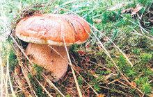 Tyhle houby nesbírejte! Dejte si v lese pozor na 6 chráněných druhů hřibů