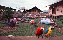 Je tomu přesně 40 let, co se uprostřed guyanské džungle odehrála tragédie, při které zemřelo 918 lidí. Někdo to nazývá hromadnou sebevraždou, další zase masovou vraždou. Jisté je, že tato jatka má na svědomí jediný člověk, Jim Jones (†47).Samozvaný kazatel, který zešílel.