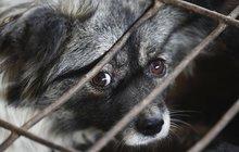 Nejen mezi ochránci zvířat vyvolala ta zpráva zhnusení: Ve Varšavě příští rok v dubnu otevřou první restaurace se psím masem! Zprovozní ji v Polsku narozený Vietnamec Jakub Pham.