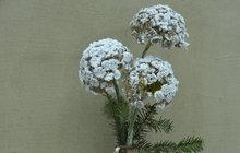 Užijte si zimní aranžmá vpodobě ledových květů pěkně v teple domova. Jak na to, to vám prozradí designérka Martina Krumphanslová z M Art studia. Uvidíte sami, že v kombinaci s umělou kožešinou a vlněným klubíčkem se jedná o kombinaci vskutku královsky zimní. A nebudete vás to stát moc času ani úsilí.