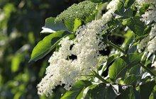 Naturopatie - Jaké bylinky vám uleví? 2. část