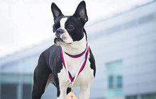 Fenku Winky unesli feťáci: Půl roku poté vyhrála psí výstavu!
