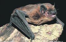 Duté cihly pro uložení se do zimního spánku nabízí už třetím rokem ochránci přírody netopýrům v Orlických horách. Jsou instalované v bunkrech, které využívají jako zimoviště.