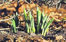 Předpověď počasí: Jarní teploty až 17 °C a vydrží až ...