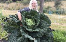 Obvykle se »hlava« jako délková míra užívá u lidí, ovšem párek australských důchodců ji může aplikovat i na své zahradě. Jejich hlávka zelí byla jen o dvě hlavy menší než pěstitelka!