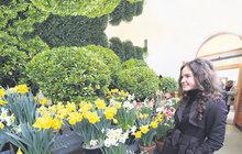 Výstava Předjaří v empírovém skleníku: Tady kvete jaro