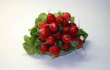 Čerstvá jarní zelenina: Ředkvičková polévka