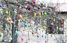 Rarita i tradice v Nechanicích: Takhle vypadá vajíčkový strom
