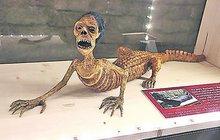 Děsivá a tajemná výstava: Monstra z Žabího sklepa