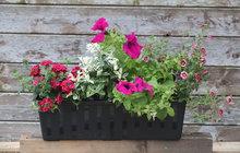 Další inspirace pro osázení truhlíků od zahradnice Martiny z Dobříše...