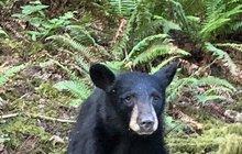 Skandál v americkém Oregonu: Medvídě milovalo lidi, raději ho tedy utratili!