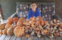 Radost v lesích na Chomutovsku: Našli osm kilo hub!