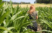 Zábava na konec prázdnin: Roseč - Bloudění v kukuřici