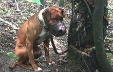 Psa nechal umírat v lese