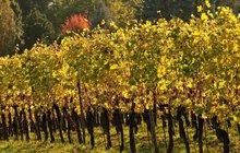 Sezona vinobraní začíná! Dobrou úrodu ale nemusíte oslavovat jen u nás…