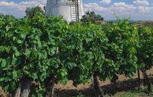 Sezona vinobraní začíná! Na sklenku k sousedům...