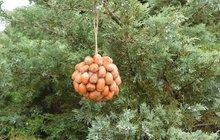 Jak na podzimní oříškové dekorace?