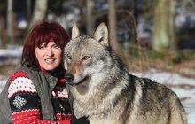 """Chovatelka Tanja Askani (57) si může říkat """"máma vlků"""", tyto šelmy ji zcela pohltily!"""