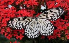 Možná se vám to už stalo. Prolétne kolem vás motýl a vaše tělo vtu chvíli zalije zvláštní pocit. Vysvětlení může být snadné – přináší vám totiž nějakou zprávu, je také znamením změny. Čeho je ještě symbolem?