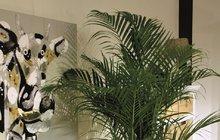Pokojové rostliny pro potěchu i pro zdraví...