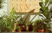 Vytvořte si zelenou stěnu z pokojových rostlin!