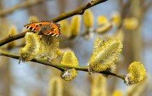 Příchod jara se obvykle pojí spříjemnými pocity. Příroda se probouzí, dny se prodlužují a my můžeme trávit více času mimo domov. Sjarním obdobím však přicházejí i nepříjemnosti. Pylová sezona už začala (nyní dominují pyly časných dřevin) a alergiky sužují rýma, svědění očí nebo kašel. Pomalu se též aktivují klíšťata a pobyt venku ssebou nese i vyšší riziko úrazů, ať už při sportu nebo zahradničení. Jak si stím vším poradit?