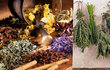 Bylinky nám mohou poskytnout přírodní léčbu mnohých potíží.