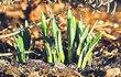 Rtuť teploměru vystřelila o víkendu až k sedmnácti stupňům. Extrémně teplé únorové počasí s sebou přinesla tlaková výše Dorit. Teplý vzduch z jihu, který proudil okolo tlakové výše pojmenované Dorit, přinesl rekordní hodnoty do celé Evropy.