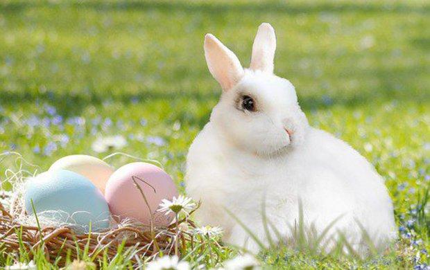 Začátek jara je tu! A sním i jedny znejoblíbenějších svátků – Velikonoce. Pro křesťany jde o nejvýznamnější část roku, kdy se slaví zmrtvýchvstání Ježíše Krista, pro ostatní je to období radosti, že zima končí a příroda se opět probouzí. U nás se obě tyto stránky Velikonoc úzce prolínají, a tak je způsob, jak je vjednotlivých rodinách slavíme, velmi podobný – uklízíme a zdobíme své domovy, pečeme a vaříme tradiční dobroty, barvíme vajíčka a chystáme se na koledníky. Proto jsme pro vás připravili velkou velikonoční přílohu, vníž najdete jarní dekorace i 40 skvělých receptů, snimiž letos určitě zabodujete.