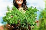 Nastal čas vysazování bylinek: Víme, na které nesmíte zapomenout