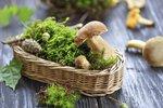 Jak zmrazit houby? Stačí malá chyba a budou plné toxinů!