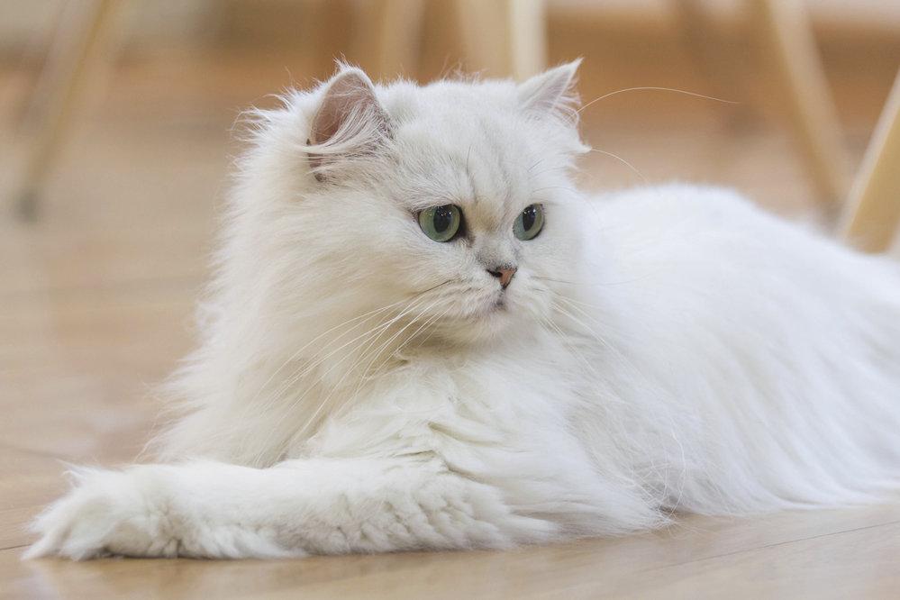 Pouze chlupatá kočička videa